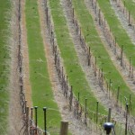 The Grande Dalles steep vineyard rows